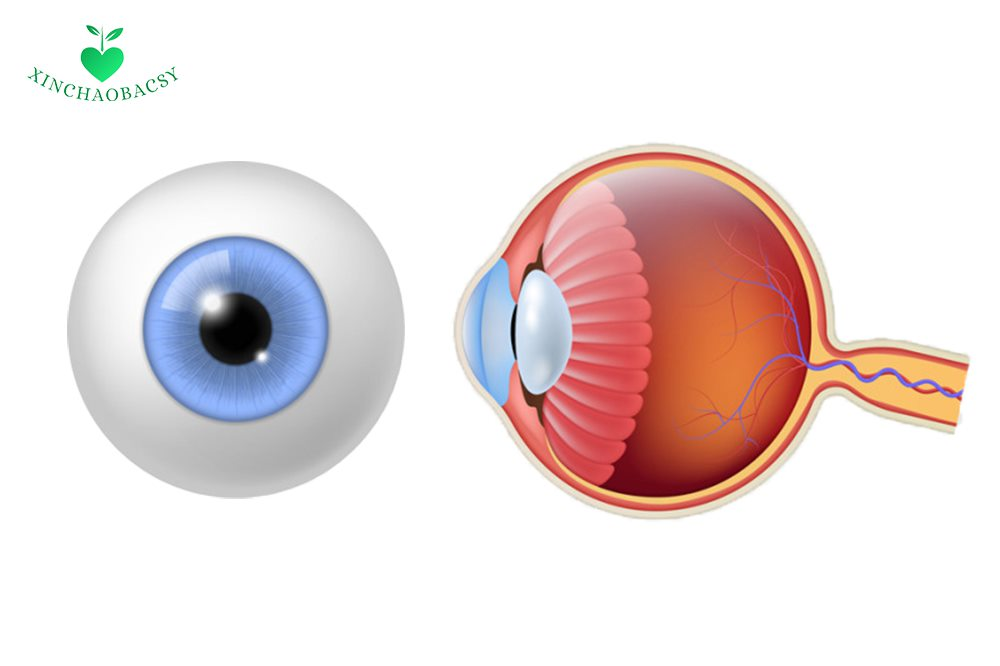 Viêm dây thần kinh thị giác – Mọi thông tin cần biết để trị hiệu quả
