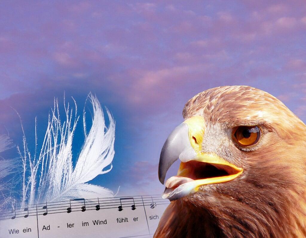 Wie ein Adler im Wind
